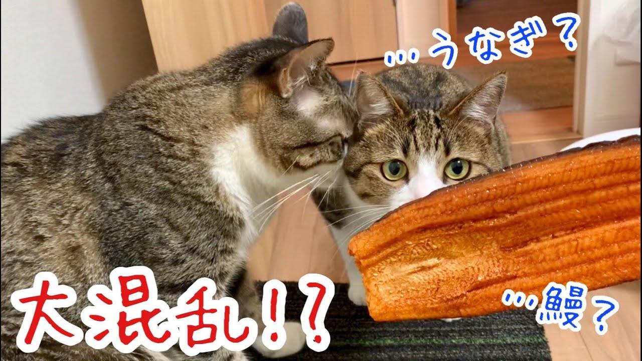 【土用の丑の日】うなぎの日!! うちの猫の名は「うなぎ」です。vol.281