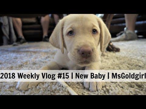 2018 Weekly Vlog #15 | New Baby | MsGoldgirl