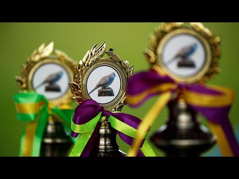 شاهد: مسابقات غناء الطيور تنافس مسابقات غناء البشر في سنغافورة! …  - نشر قبل 2 ساعة