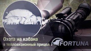 Охота на кабана в тепловизионный прицел FORTUNA(Тепловизионные прицелы FORTUNA: http://tut.ru/FORTUNA Еще совсем недавно тепловизионные прицелы были роскошью, которую..., 2011-10-10T05:37:35.000Z)