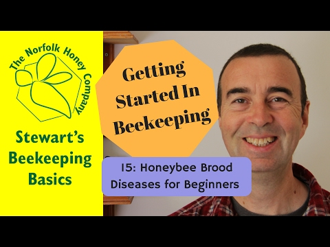 Getting Started in Beekeeping: 15: Brood Diseases in Honeybees - #Beekeeping - The Norfolk Honey Co.