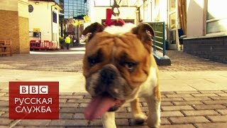 Ветеринары советуют не заводить собак с плоской мордой