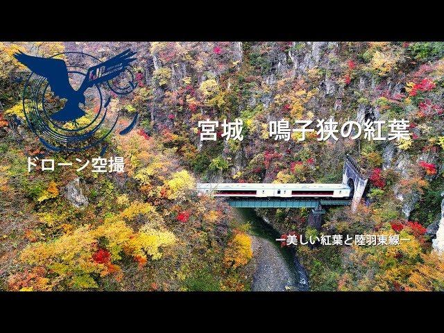 ドローン空撮 宮城県 鳴子狭の紅葉 -美しい渓谷の紅葉と陸羽東線ー