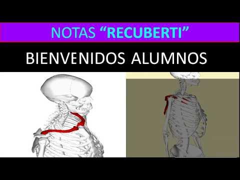anatomÍa-humana(extremidad-superior-osteologÍa):-clavícula-y-escápula.