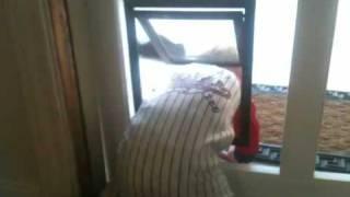 Baby boy climbs through doggy dog door