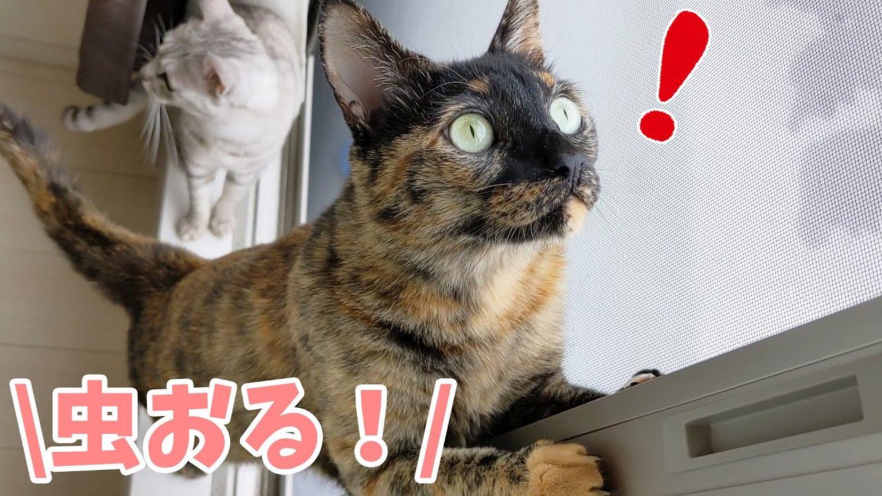 網戸に虫を見つけた猫たちの反応がこちら!
