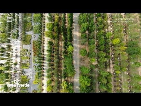 Pistoia: gli alberi della vita - Linea Verde Estate 13/08/2017