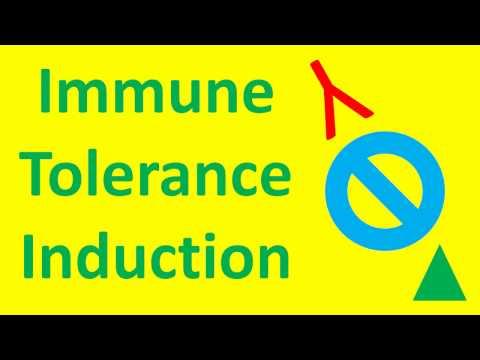 What is Immune Tolerance Induction? (Hemophilia A Inhibitors, Autoimmune Disease, Transplant)