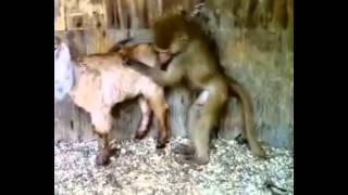 Секс животных. Приколы 2015.  #1