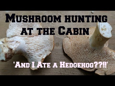 Mushroom Hunting at the Cabin and I Ate a Hedgehog!
