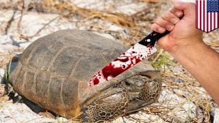 Пожиратель черепах, охраняемых законом
