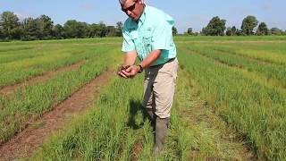 Loyant® Herbicide - Demonstration by Jeff Ellis