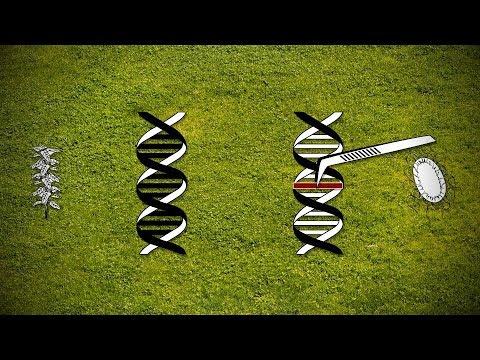 Transgenic Foods (GMO) - About the set of problems with genetically manipulated foods