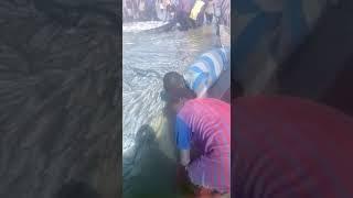 Mali: Des poissons morts mystérieusement ramassés pour être vendus