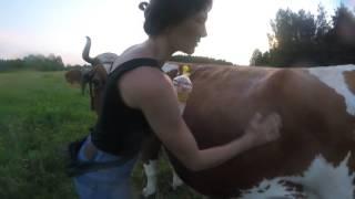 NEOSTOMOSAN. Как я спасаю своих животных от гнуса.