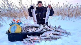 ПО 3 4 ЩУКИ С ОДНОЙ ЛУНКИ Что ТВОРИТСЯ Рыбалка на ЖЕРЛИЦЫ 2020 2021 ЖОР
