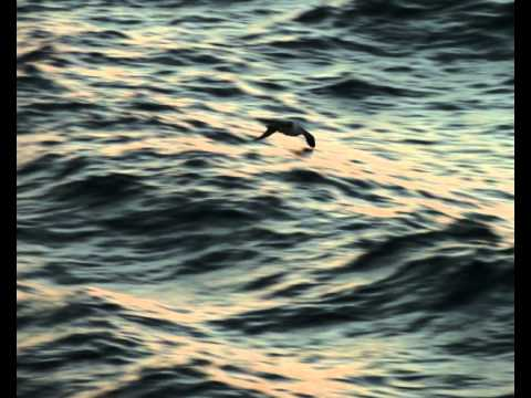 Falklands 2011/12 - Final Cut.wmv