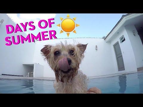 Summer Days / Días de Verano - Camila the Silky Terrier