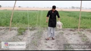 Tait Goriye.( ਘੈਟPhotography) Lateast Punjabi Song