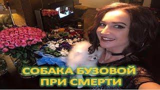 БУЗОВА ДОВЕЛА СВОЮ СОБАКУ ДО СМЕРТИ   (20.06.2017)