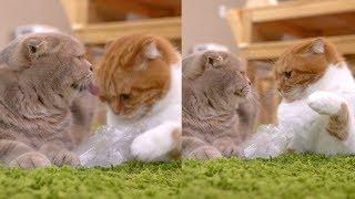 오해가 부른 참사! 고양이의 초강력 냥냥펀치