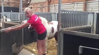 Pony uit de ponystal halen
