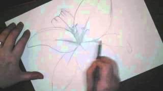 Draw a Tiger Lily