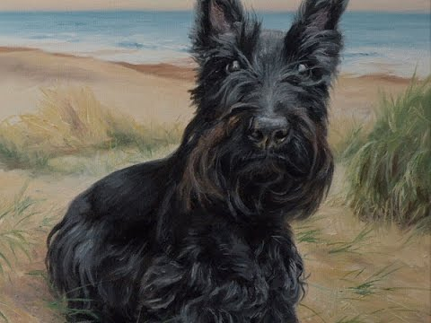 "Dog portrait, oil painting of Scottish Terrier ""Alfie""time-lapse, speed-painting"