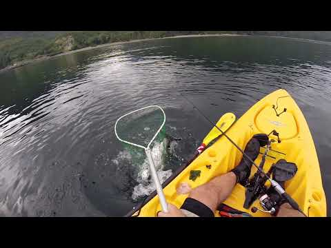 British Columbia Kayak Fishing Salmon Lingcod Dolphins Orcas Bears