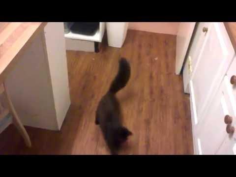 Funny Cats Clip - Cats doing weird stuff!