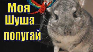 Шиншилла тайный агент /Моя Шуша попугай/ Шиншилла гуляет/ Елена и зверята