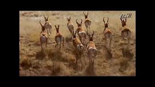 Джунгли.Мир Животных и Дикой природы.Документальный фильм HD
