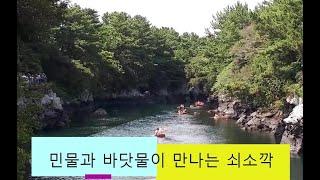 [제주도여행] 쇠소깍/봄,여름,가을,겨울 제주도여행추천…