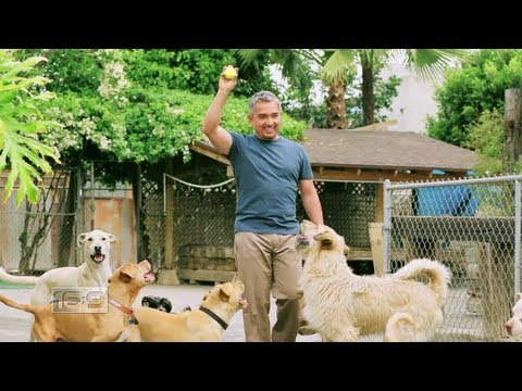 Leader of the Pack: Cesar Millan