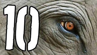 10 zwierząt, które wkrótce mogą wyginąć [TOPOWA DYCHA]
