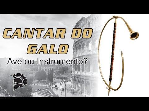 CANTAR DO GALO - AVE OU INSTRUMENTO? / SINGER OF COCK - BIRD OR INSTRUMENT?