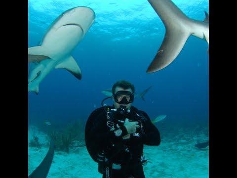 Red Sea Shark Attacks 2010 EgyptianTV Interview John Kean