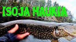 ISOJA HAUKIA UL-VÄLINEILLÄ // ITSENÄISYYSPÄIVÄ 2019 // KALASTUS