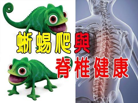 【蜥蜴爬之定點運動】 苦行老師告訴您蜥蜴爬、端坐與脊椎的健康關係