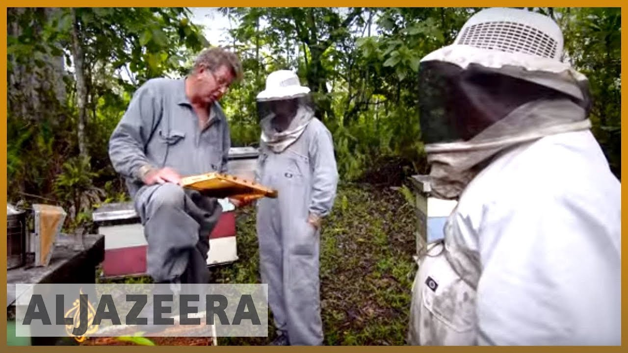 Niue pushes for bee sanctuary