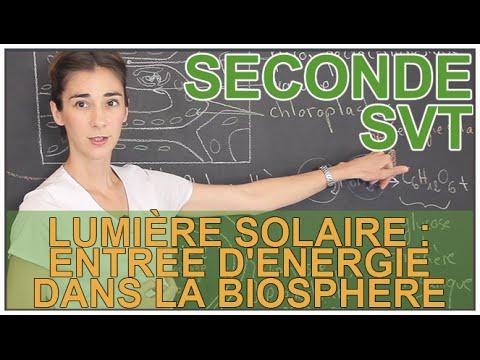 Lumière solaire : entrée d'énergie dans la biosphère - SVT - Seconde - Les Bons Profs