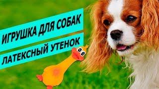 Игрушка для собак утенок латексный Трикси | Обзор игрушки утенка | Trixie Duck fore dogs review