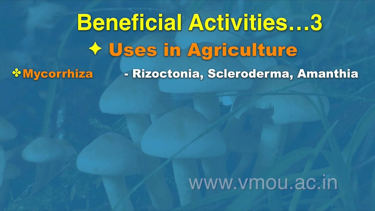 Economic importance of fungi in commercial agriculture ▷ Legit ng