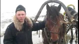 Соревнования по конному спорту, Усть Цильма Время новостей  6 04