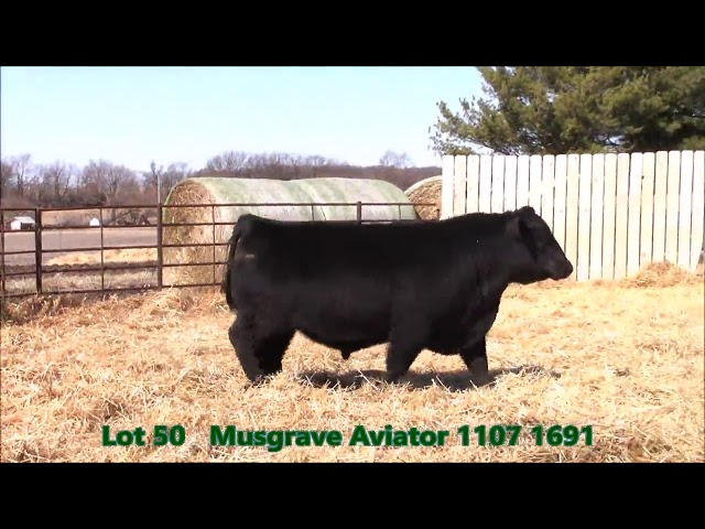 Musgrave Angus Lot 50