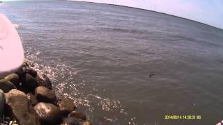 鹿港大海釣具-佳宏-鹿港北堤
