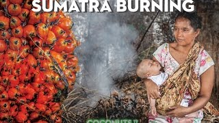 Sumatra Burning: The heart of palm oil (PART 2)