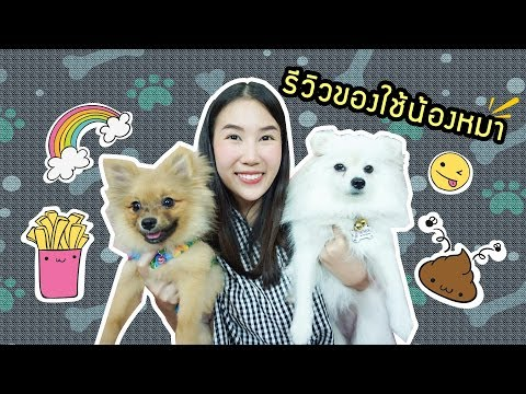 My favorites รีวิวของใช้สุนัข แพรวเลี้ยงสุนัขยังไง ของที่ต้องมี!!! | Prawwave
