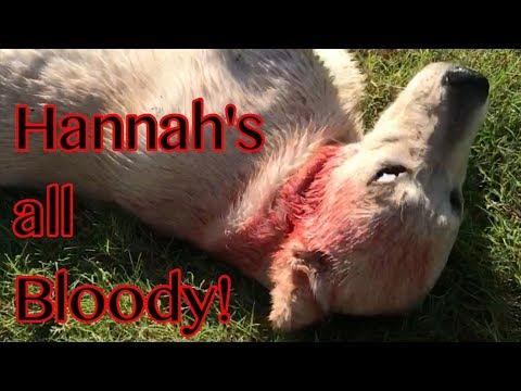 Is Hannah Hurt?