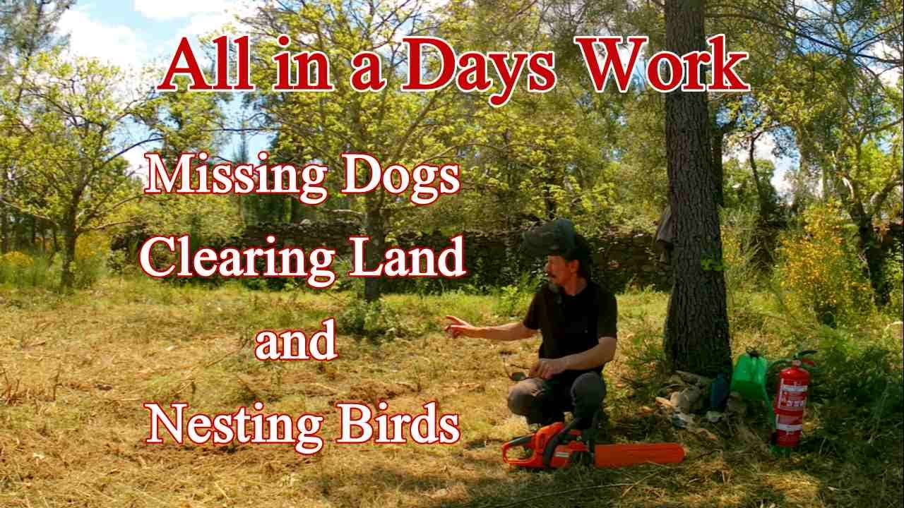 All in a Days Work  - Missing dogs, Clearing Land and Nesting Birds in Portugal.